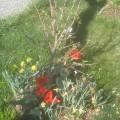 2012-04-01_fruehling-im-garten_103